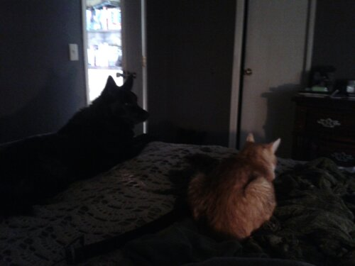 Guardians of the Morning - Tiger & Midnight keeping Guard 01-19-2013